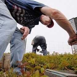 Maine's 2011 wild blueberry harvest worth $70.1 million