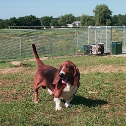 Midcoast dog parks offer outlet for canine friends