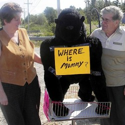 Family returns 'freed' gorilla to East Machias store