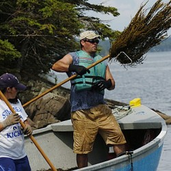 Seaweed harvests stir opposition Down East