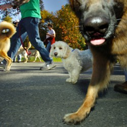 Paws on Parade takes over Bangor's waterfront to benefit pets awaiting adoption
