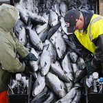 Spread of salmon farms in Canada target of lawsuit