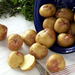 How not to grow potatoes in a Maine garden
