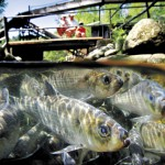 State's migratory fish plan gets mixed reviews