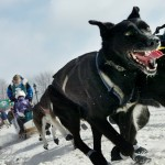 Weather forces mushers to hunker down nine miles from the finish