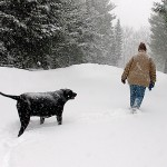 Parks survey focuses on pet owners' use of city trails
