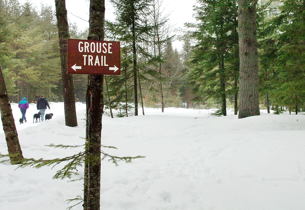 People walk near the Grouse Trail in the Rolland F. Perry City Forest on Friday, March 6, 2009, the location of the last known owl attack according to city forester Brian Dugas. Great horned owls have been attacking users of the forest for the last month and have even targeted people's dogs. Buy Photo