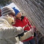 For midcoast kids, maple-tapping is sweet experience