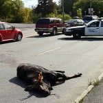 Motorists warned about moose