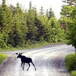 Guides association arranges moose permit swap service