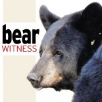 New Sharon facility allows bears to be bears