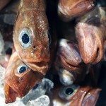 New NE fishing rules stir up uncertainty