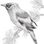 The decline of a grassland bird species