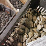 Panel acts to save positions for oversight of Maine shellfish industry