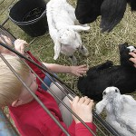 RASA Farm Hands Program at Aldermere Farms