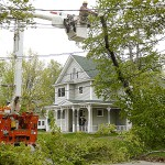 Fallen tree knocks out power to 1,000 CMP customers