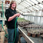 Students transplant heirloom tomatoes for Morris Farm Plant Sale