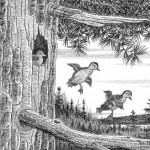 Hollis Center artist wins waterfowl stamp contest