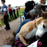 Dog training on Bangor Waterfront