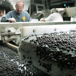 Blueberry Rakers' Center opens in Washington County; workers hotline available Aug. 1