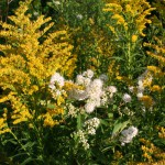 Native Penstemon and Meadowsweet help bring nature home