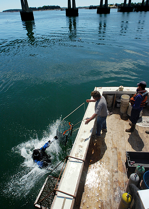 State: Scallop conservation measures paying off with record average statewide price in 2012