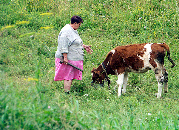 Old Russian Babushka yelling at a stubborn calf, Eastern Siberia, Russia. (Photo courtesy of Levi Bridges)