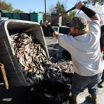Herring shortage saps wind from lobstermen's sails