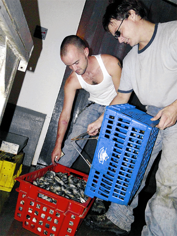Sheldon 'Boo' Tyler of Trescott (white tee) of Phinneys Fisheries  Eric McLean of Lubec (clammer in gray tees) pours clams to be weighed in for sale Chessie Crowe photo