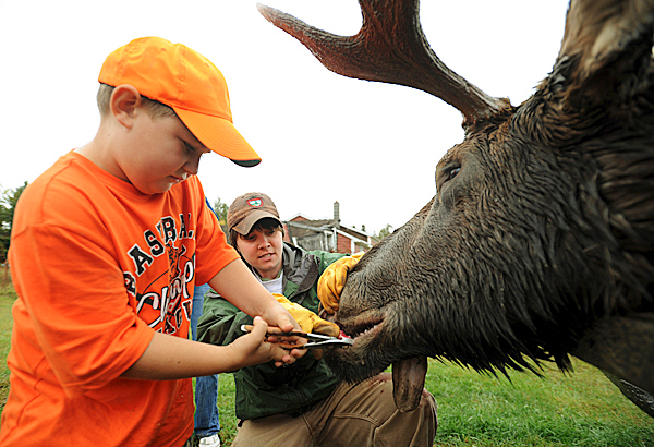 Roy Whalen III, 7, left, of Sullivan gets some help from biologist tech Heidi Johnston while removing a tooth from his father's bull moose at the tagging station at Gateway Variety in Ashland on Monday, September 28, 2009. Whalen's moose weighted in at 628 pounds. (Bangor Daily News/Kevin Bennett)