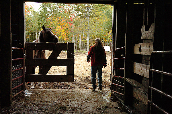 Debbie McLain calls in horses and ponies to feed them at the Downeast Equine & Large Animal Society, which McLain operates in Cherryfield on Wednesday, Sept. 30, 2009. In addition to horses, the shelter is one of the only to take farm animals from turkeys and chickens to cows, goats and sheep. McLain said she has had to turn down 40 to 50 animals in the last year. &quotI can't take any more and endanger what I have.&quot (Bangor Daily News/Bridget Brown)