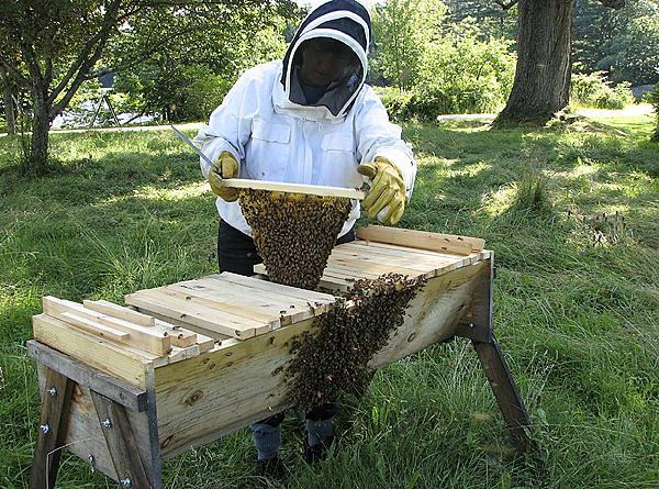 Beekeeper Christy Hemenway works on a hive that is in the process of swarming.  (Photo courtesy of Christy Hemenway)