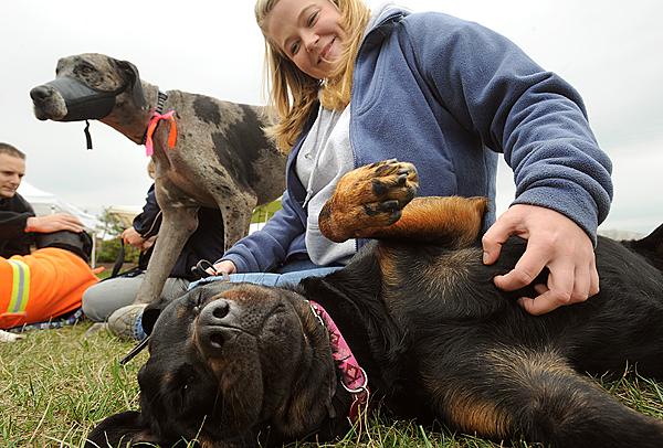 Rrianna Graves of Hermon scratches the belly of her five-year-old Rotweiler Lilyana during the 16th annual Paws on Parade at the Bangor Waterfront Saturday mornin.  Hundreds of people showed up with their four-legged friends to participate in a parade, custome contest and other activities.  The event is a fundraiser for the Bangor Humane Society. (Bangor Daily News/Gabor Degre)
