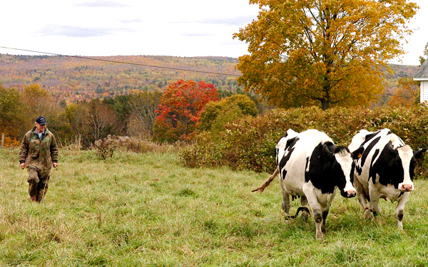 Maine organic milk company struggles as money runs out