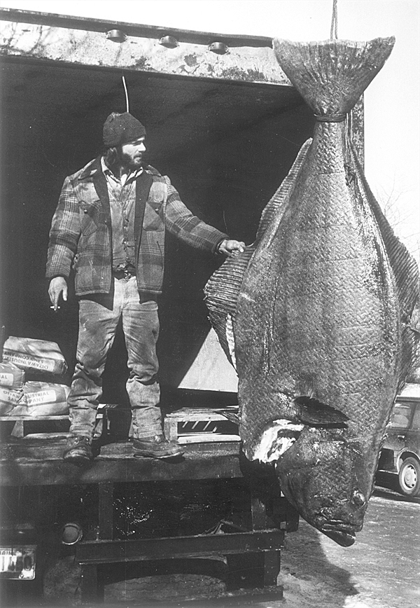 Bangor Daily News File Photofish is confirmed to be a Halibut