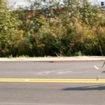 Hot dog! Dogs, owners participated in the 5K Canicross Race in New Gloucester