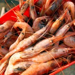 Move over, lobster: Shrimp takes center stage at festival