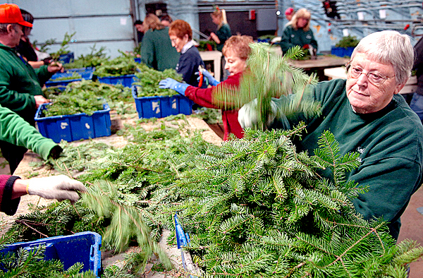 Workers at Kelco Industries including Gloria Beal (right) sort and size balsalm fir tips for wreath-making Thursday, Nov. 12, 2009 in Milbridge. Doug Kell Jr. said he expected the company to make about 75,000 wreaths this year. BANGOR DAILY NEWS PHOTO BY BRIDGET BROWN