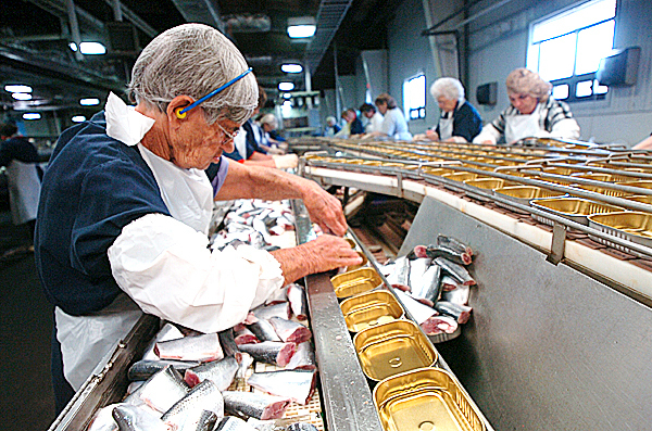 Lela Anderson packs herring on the floor at Stinson Seafood in this Oct. 17, 2006 file photo. Anderson has been packing sardines for more than 50 years at the plant.