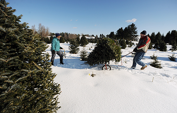 Cathy and Ken Hanscom cart their prized Christmas tree from the field at Carpenter's Tree Farm in Old Town on Saturday, December 12, 2009. The Hanscoms had pre-selected their tree two weeks before and were anxious  too see if it had survived the recent snow and winds. (Bangor Daily News/Kevin Bennett)