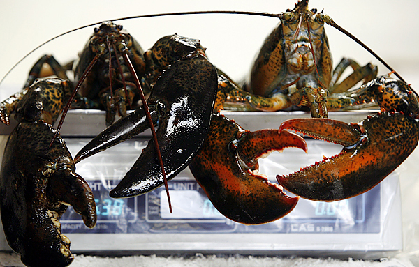 Two large lobsters are weighed on a scale at a fish market in Bath, Maine, on Wednesday, December 16, 2009. Maine's attorney general is investigating allegations of price-fixing among some lobster dealers in the state following complaints by lobstermen. It was launched after the office received a letter signed by more than 50 lobstermen seeking a probe of lobster dealers. Maine lobstermen account for more than 80 percent of U.S. landings and the state has nearly 6,000 licensed harvesters.