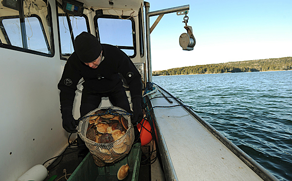 Andy May, unloads a bag of scallops for sorting aboard his boat near the coast of Mount Desert Island on Saturday, December 19, 2009. May attempts to land enough scallops a day to fill a five gallon bucket. BANGOR DAILY NEWS PHOTO BY KEVIN BENNETT