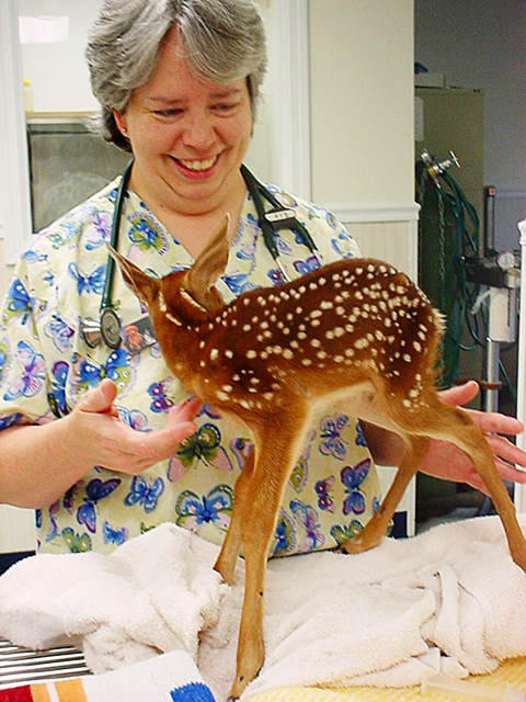 Seeking to fill a void in Aroostook County, Dr. Lori Brown, a veterinarian from Caribou, will offer a traveling veterinarian service starting Feb. 1. Brown, a Maine licensed veterinarian who has practiced in Caribou for nearly 10 years,