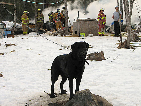 A dog stands guard on a dog run Wednesday in Lamoine while firefighters extinguish the flames of a small structure fire behind him. A small, camp-style dwelling was destroyed but no one was hurt in the blaze, according to Lamoine Assistant Fire Chief Stu Marckoon. BANGOR DAILY NEWS PHOTO BY BILL TROTTER