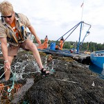 Look at the science. Maine harvesting of rockweed is sustainable