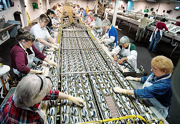Packers fills sardine cans at the Stinson Seafood plant, the nations's last sardine cannery, Monday, April 25, 2005, in Gouldsboro, Maine. In 1950 there were 46 sardine plants in Maine. (AP Photo/Robert F. Bukaty)