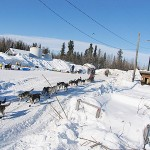 A musher and his dogs race away from a checkpoint in McGrath, Alaska as they continue along the Iditarod trail.  PHOTO COURTESY OF NADA LEPER