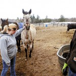 Horse farm owner arrested on cruelty charges