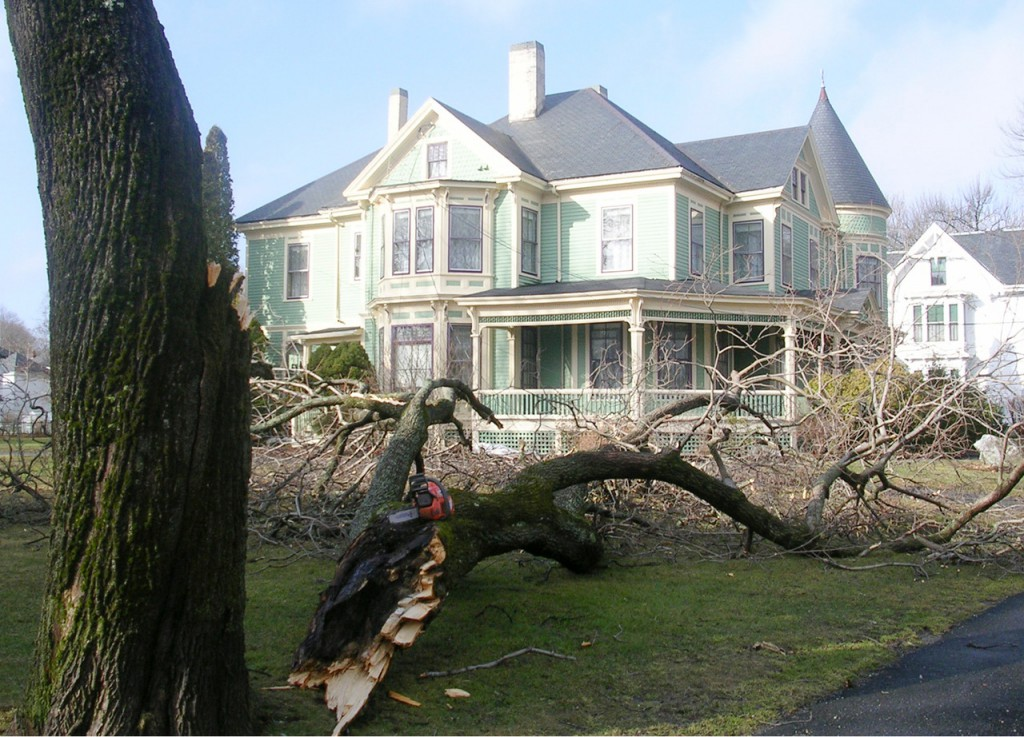 Part of a tree fell into the LimeRock Inn's yard during Thursday night's storm. The tree took some power lines down with it. Photo taken Friday morning, Feb. 26, 2010. (Bangor Daily News photo by Heather Steeves)