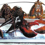 Maine lobster industry encouraged to plan ahead for likely fishery decline